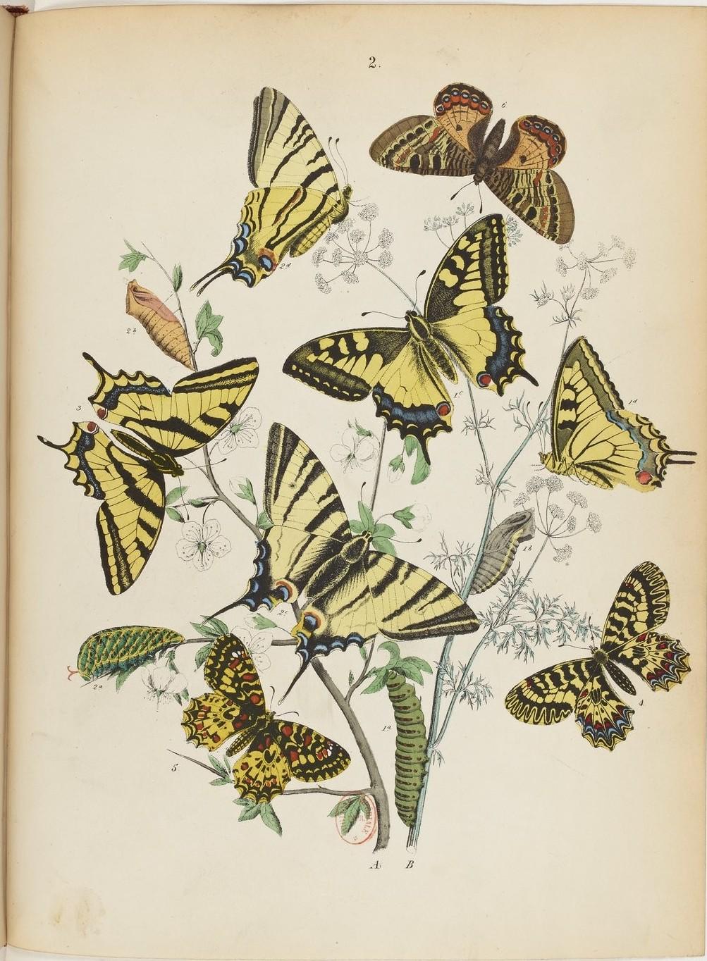Le monde des Papillons Maurice Sand 3