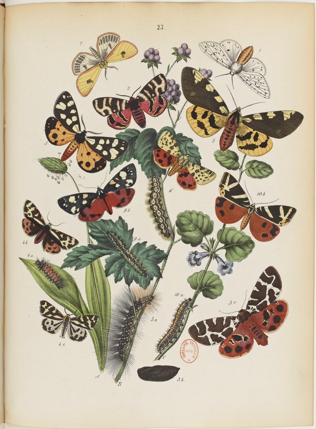 Le monde des Papillons Maurice Sand 6