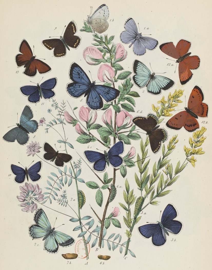Le monde des Papillons Maurice Sand 8