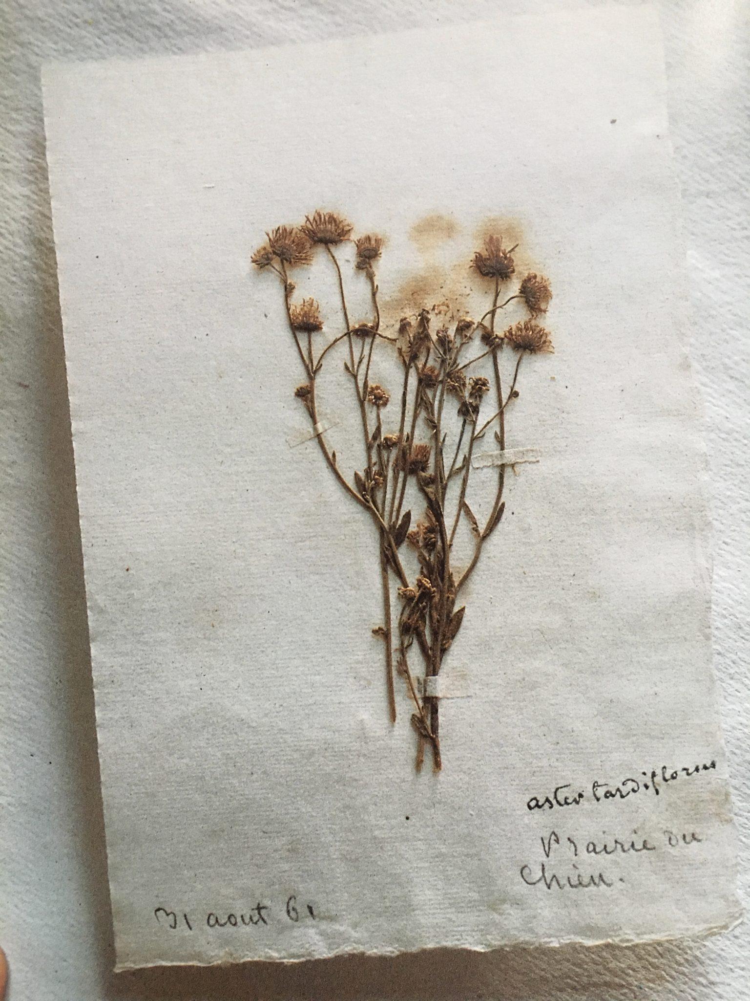 Nohant herbier 18