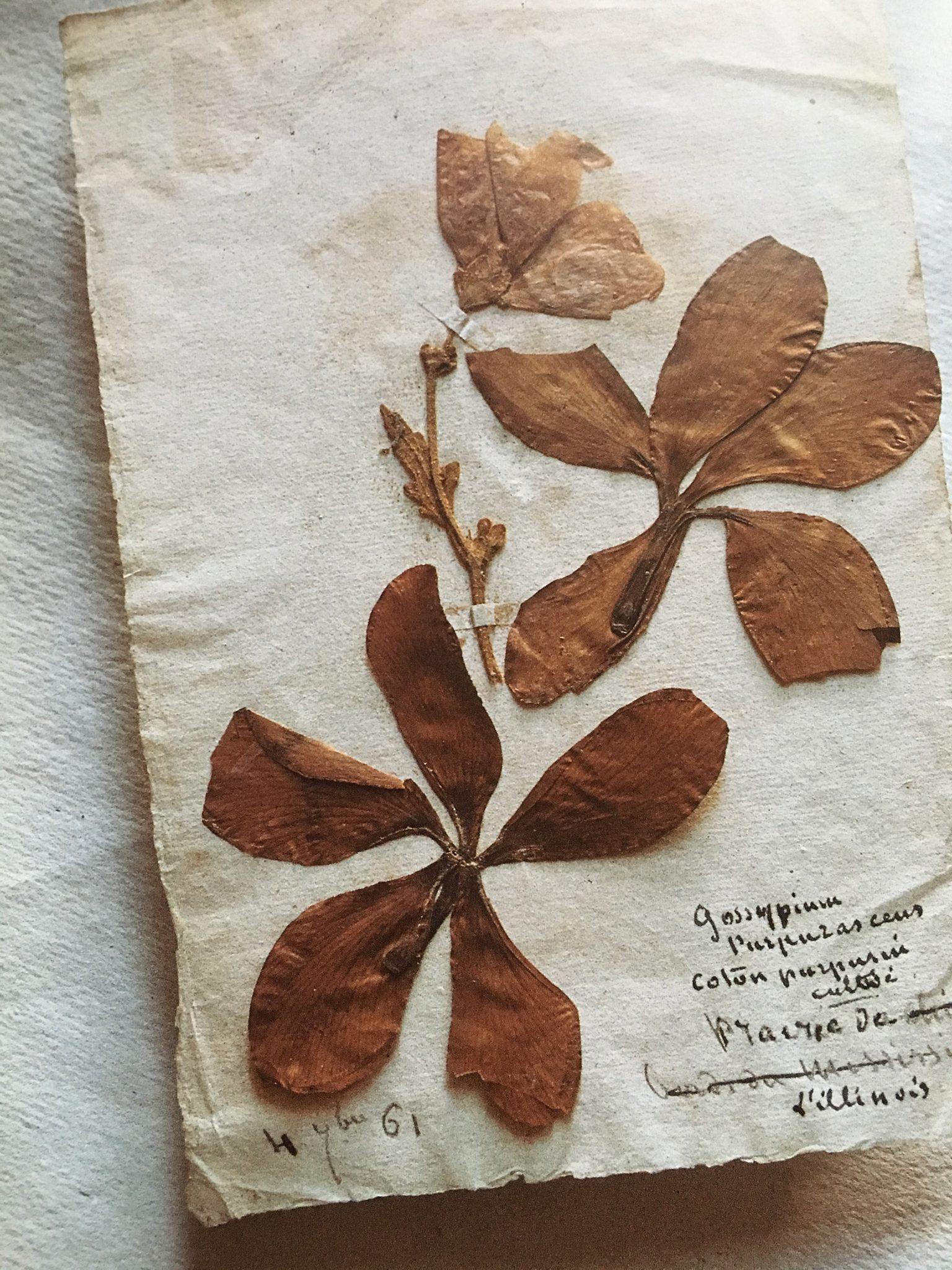 Nohant herbier 19