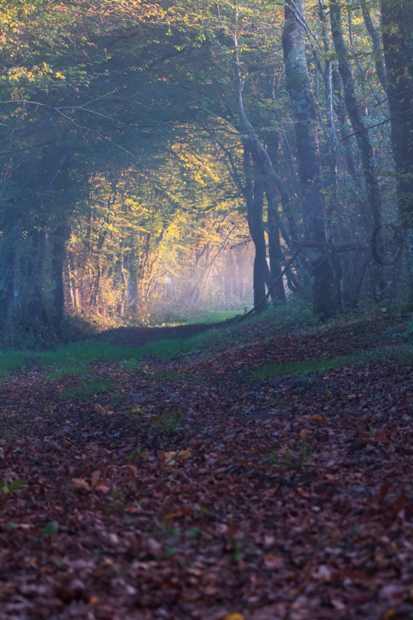 Paysage - Chemin forestier 2 1 151017 copie