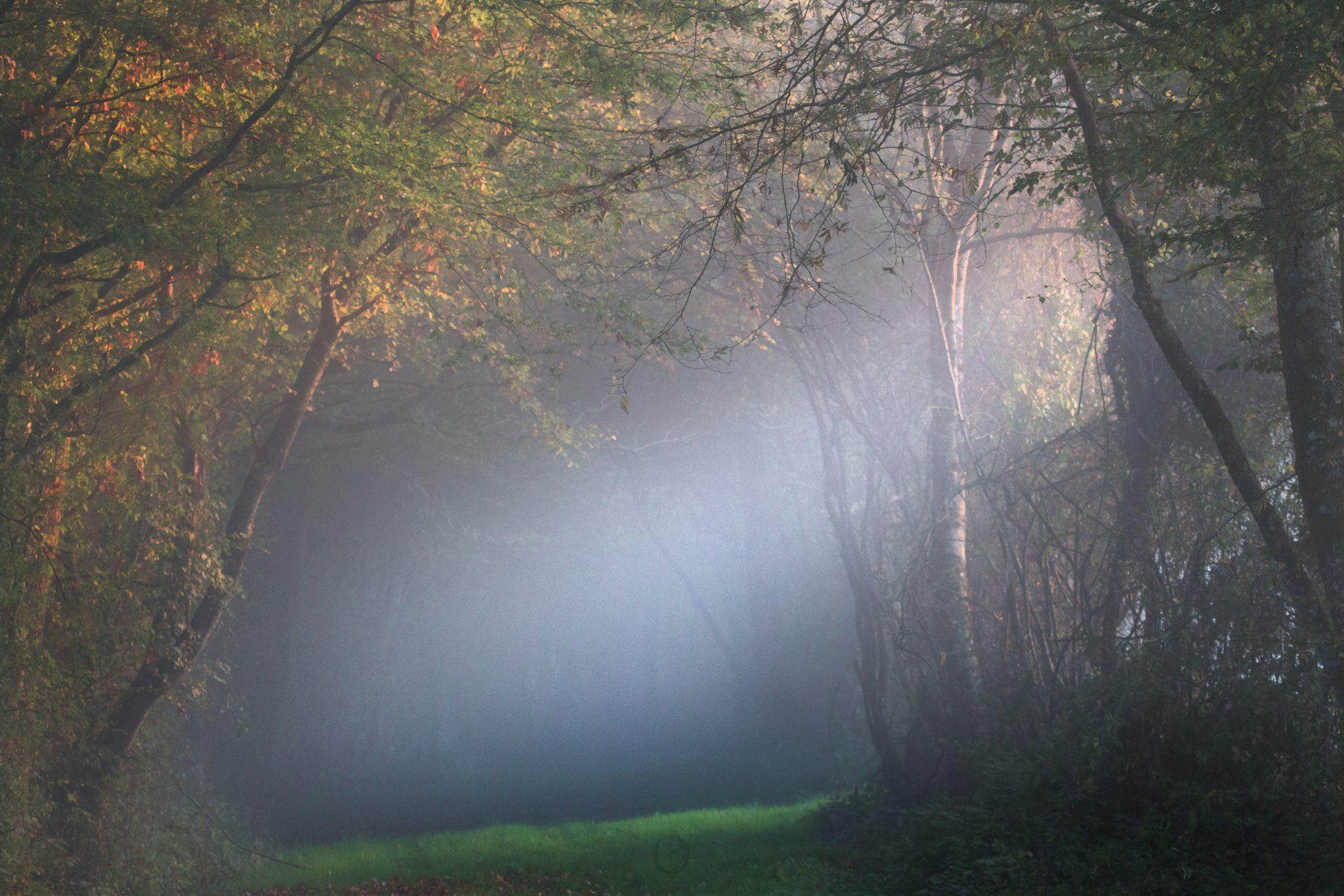 Paysage - Chemin forestier 3 151017 copie